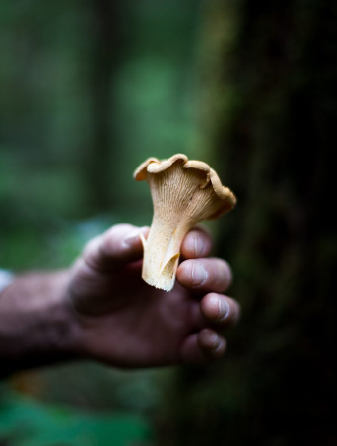 a hand holding a chanterelle mushroom in the woods.