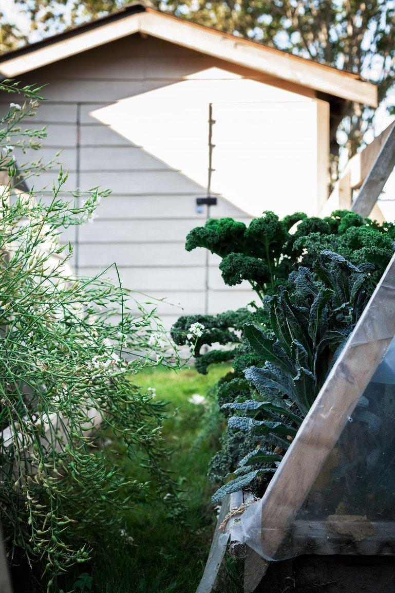 The Simple Green Summer Garden