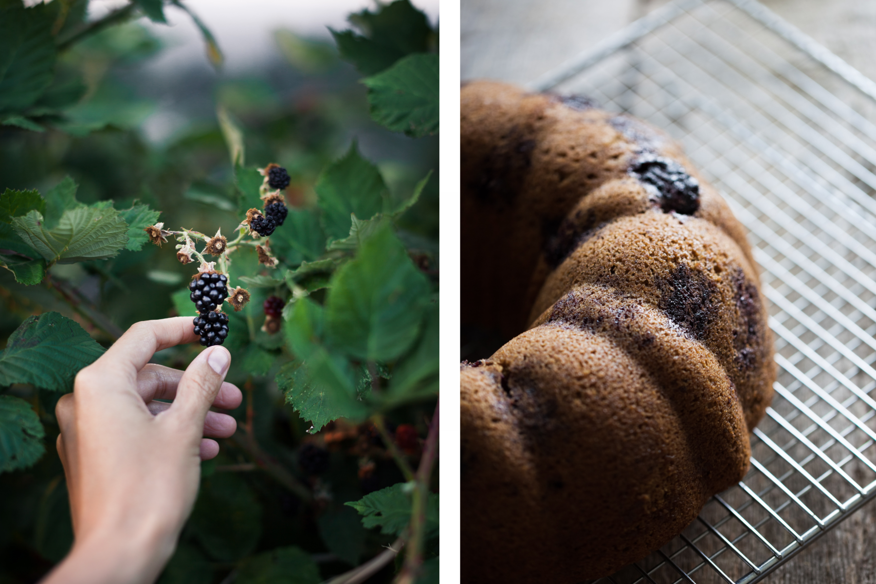 side by side picking blackberries and bundt cake