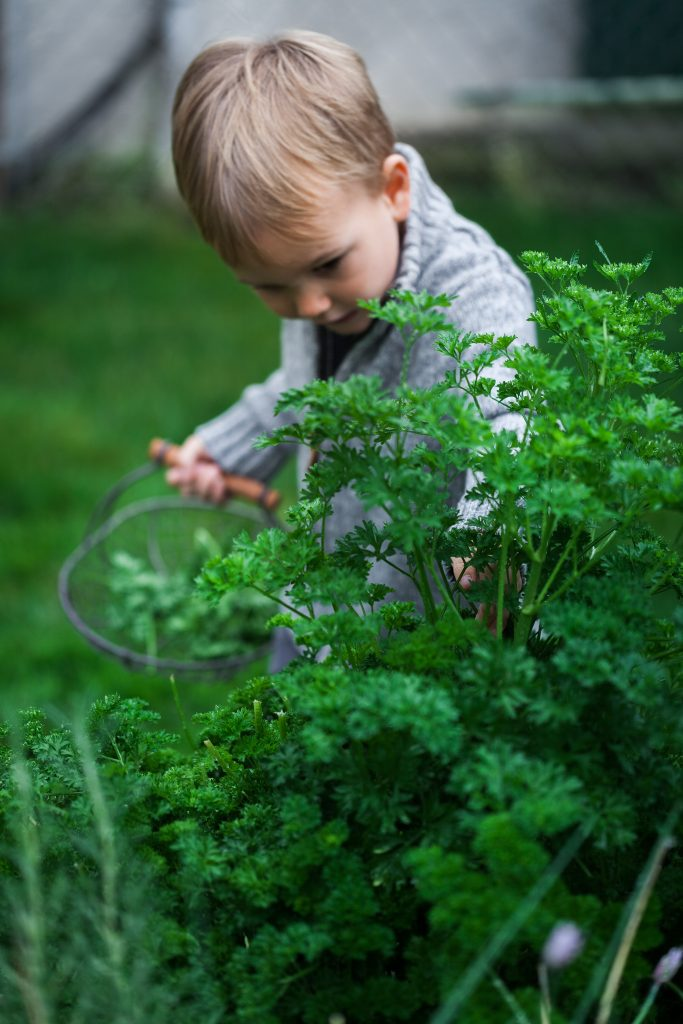 a small child with a basket of parsley in a garden.