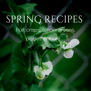 "close up of pea flowers on the vine with text overlay ""spring recipes-fruit crisps, tender greens, pickles & more"""